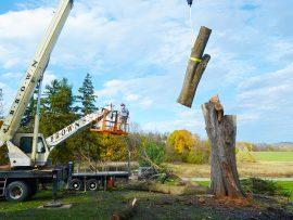 crane-strapped-limbs-270x203.jpg