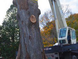 stump-pick-up-270x203.jpg
