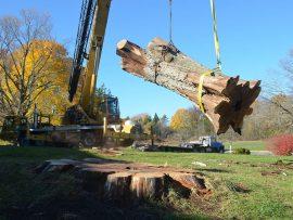 23-25000-pound-log-270x203.jpg