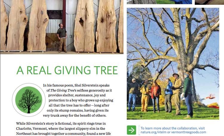 TNCs Vermont Elm Story